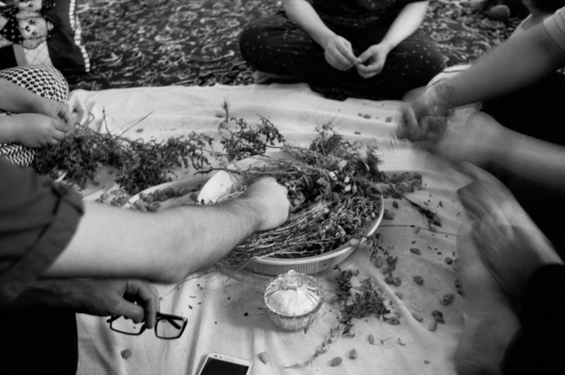 Mehabad, Iraans Koerdistan. Juni 2016. Tijdens het seizoen van de kikkererwten, komen de families na het avondeten bij elkaar om de bonen te eten bij de thee.