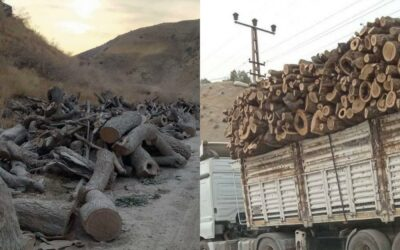 DEFORESTATION with the aim of DEPOPULATION – A criminal way to make the Kurdish region uninhabitable